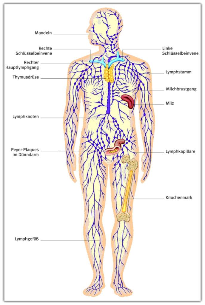 Körper-Grafik